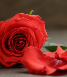 Carol Williams Obituary - Spanish Fork, UT | Legacy Funerals